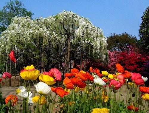 nhiều hoa khác cũng được trồng ở đây