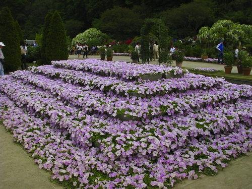 nhiều loài hoa khác 1