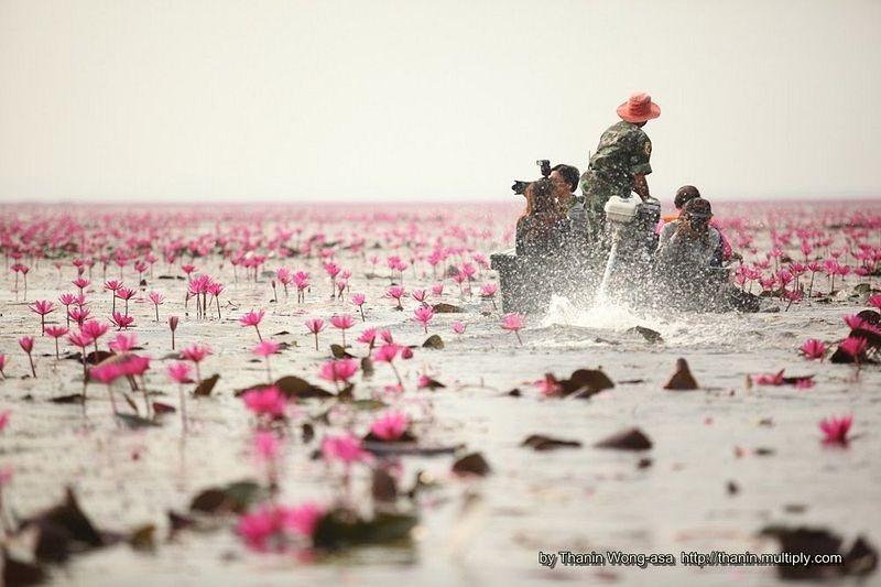 Hồ hoa súng đỏ ở Kumphawapi Thái Lan Dịch vụ điện hoa Hà Nội – dịch ra tiếng việt theo CNN. 3