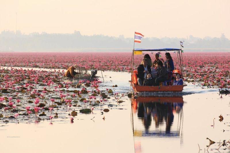 Hồ hoa súng đỏ ở Kumphawapi Thái Lan Dịch vụ điện hoa Hà Nội – dịch ra tiếng việt theo CNN. 8